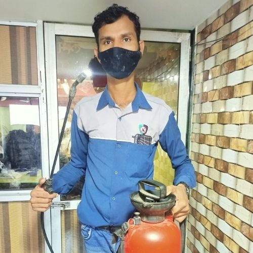 pest control in dombivli west maxo office ajay